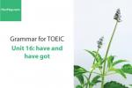 Sách Ngữ pháp tiếng anh luyện thi TOEIC – Unit 16: have và have got – Học Hay
