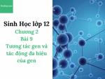 Sinh Học lớp 12 - Chương 2 - Bài 9: Tương tác gen và tác động đa hiệu của gen - Học Hay