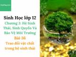 Sinh Học lớp 12 - Chương 3 - Bài 36: Trao đổi vật chất trong hệ sinh thái - Học Hay
