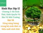 Sinh Học lớp 12 - Chương 3 - Bài 38: Dòng năng lượng trong hệ sinh thái và hiệu suất sinh thái - Học Hay
