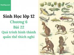 Sinh Học lớp 12 - Chương 6 - Bài 22: Quá trình hình thành quần thể thích nghi - Học Hay