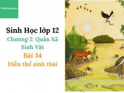 Sinh Học lớp 12 - Chương 2 - Bài 34: Diễn thế sinh thái - Học Hay