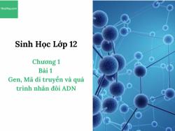 Sinh Học lớp 12 - Chương 1- Bài 1: Gen, Mã di truyền và quá trình nhân đôi ADN - Học Hay