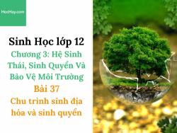Sinh Học lớp 12 - Chương 3 - Bài 37: Chu trình sinh địa hóa và sinh quyển - Học Hay