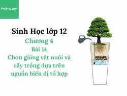 Sinh Học lớp 12 - Chương 4 - Bài 14: Chọn giống vật nuôi và cây trồng dựa trên nguồn biến dị tổ hợp - Học Hay