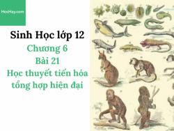 Sinh Học lớp 12 - Chương 6 - Bài 21: Học thuyết tiến hóa tổng hợp hiện đại - Học Hay