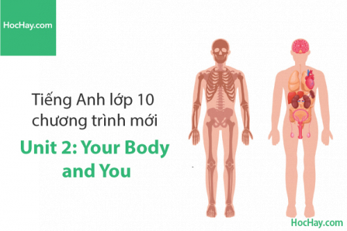 Tiếng Anh lớp 10 – Unit 2: Your Body and You – Học Hay