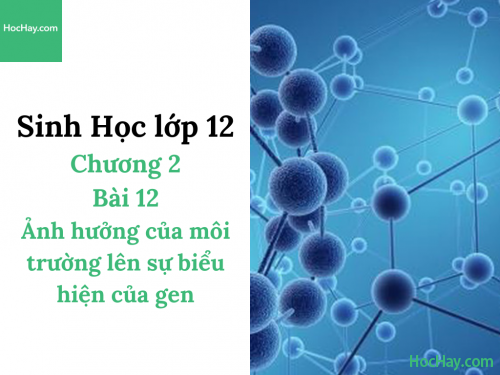 Sinh Học lớp 12 - Chương 2 - Bài 12: Ảnh hưởng của môi trường lên sự biểu hiện của gen - Học Hay