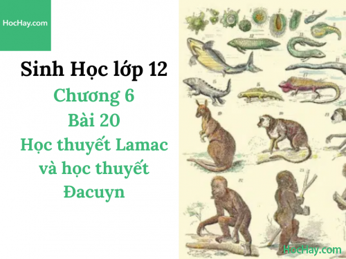 Sinh Học lớp 12 - Chương 6 - Bài 20: Học thuyết Lamac và học thuyết Đacuyn - Học Hay