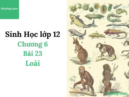 Sinh Học lớp 12 - Chương 6 - Bài 23: Loài - Học Hay
