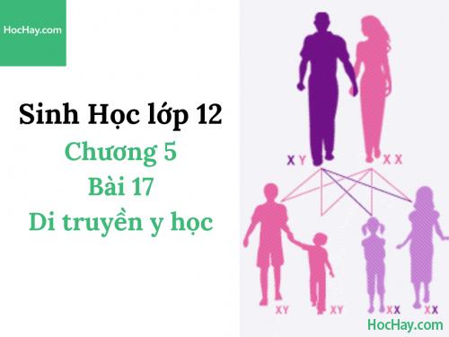 Sinh Học lớp 12 - Chương 5 - Bài 17: Di truyền y học - Học Hay